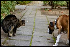 Cat and Dog angry