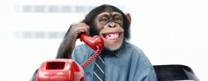 monkey-customer-service